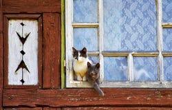 Nette Katzen, die draußen überwachen lizenzfreies stockbild