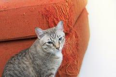 Nette Katzen, die nahe bei dem Sofa sitzen Lizenzfreies Stockbild