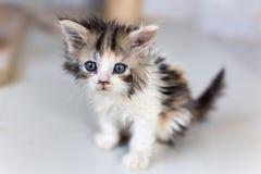 Nette Katzen, schöne Katzen Stockbild