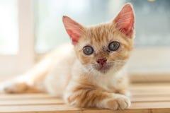 Nette Katzen, schöne Katzen Stockbilder