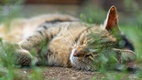 Nette Katzenlügen, die Gras behing sind Stockbilder