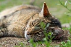 Nette Katzenlügen, die Gras behing sind Stockbild