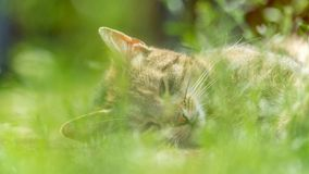 Nette Katzenlügen, die Gras behing sind Stockfotografie