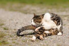 Nette Katzenlügen draußen und Behandlung oben lizenzfreie stockbilder