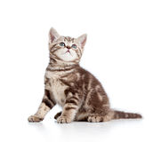 Nette Katzenmiezekatze, die oben schaut Stockfoto
