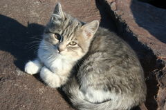 Nette kleine Katze Stockfotos