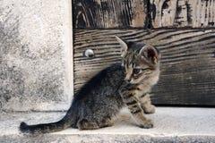 Nette kleine Katze, die ihr Endstück schaut Stockbilder