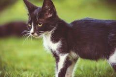 Nette kleine Katze, Kätzchen im Freien, Katzenspielen lustig und schön stockfotografie