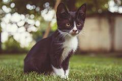 Nette kleine Katze, Kätzchen im Freien, Katzenspielen lustig und schön lizenzfreie stockbilder