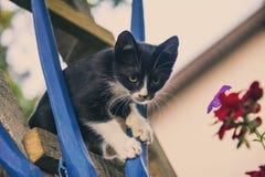 Nette kleine Katze, Kätzchen im Freien, Katzenspielen lustig und schön stockfotos