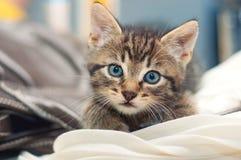 Nette kleine Katze liegt auf einer Decke stockbilder