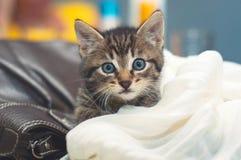 Nette kleine Katze liegt auf einer Decke stockbild