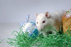 Nette kleine Ratte Stockbild