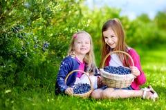 Nette kleine Schwestern, die frische Beeren auf organischem Blaubeerbauernhof auswählen Stockfotos