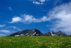 Nette landwirtschaftliche Landschaft mit einem Feld der Blumen Lizenzfreie Stockfotografie