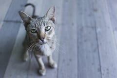 Nette lustige Katze Stockbild
