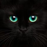 Nette Mündung eines Abschlusses der schwarzen Katze oben Lizenzfreie Stockfotos