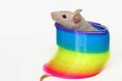 Nette Maus, die im Spielzeug sitzt Stockbild