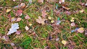 Nette naalden en kegeldaling aan grond Gevallen bladeren ter plaatse stock videobeelden