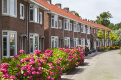 Nette Nachbarschaft mit Blumen in der Straße stockfotografie
