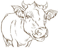 Nette naturalistische Kuh Stockfoto