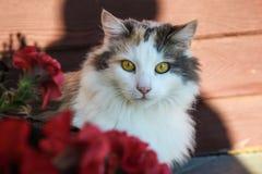 Nette neugierige Katze, die draußen nahe bei Blumentopf sitzt stockbild