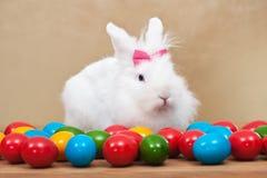 Nette Osterhase sitzende iamong bunte Eier Stockbild