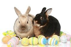 Nette Osterhasen mit farbigen Eiern Lizenzfreies Stockfoto