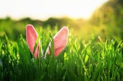 Nette Ostern-Szene mit den rosa Hasenohren, die im Frühjahr aus grüner saftiger Wiese des Grases heraus haften lizenzfreies stockbild