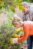 Nette Paare, die aromatische Kräuter auswählen stockfoto