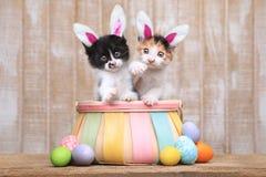Nette Paare Kätzchen innerhalb eines Ostern-Korbes Stockfoto