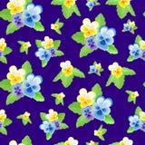 Nette Pansies auf blauem Hintergrund Lizenzfreie Stockfotos