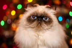 Nette persische colourpoint Katze vor Weihnachten-bokeh Stockbild