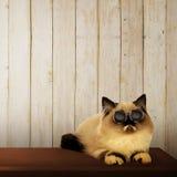 Nette persische Katze auf dem Tisch Lizenzfreies Stockfoto