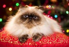Nette persische Katze, die auf einem Weihnachtskissen mit bokeh liegt Lizenzfreies Stockbild