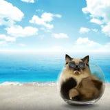 Nette persische Katze innerhalb der Glasschüssel Lizenzfreie Stockfotos