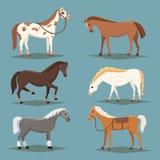 Nette Pferde im verschiedenen Haltungsvektordesign Wilde lokalisierte Vektorschläuche des Karikaturbauernhofes Sammlung der Tierp Stockbild
