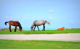 Nette Pferdefamilie Lizenzfreie Stockbilder