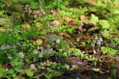 Nette Pilzfamilie im Wald unter Gras Lizenzfreie Stockbilder