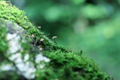 Nette Pilzfamilie im Wald unter moos Stockbild