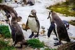 Nette Pinguine Stockbilder