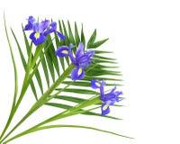 Nette purpurrote Iris und Farn Stockfotos