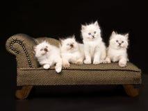 Nette Ragdoll Kätzchen auf braunem Wagen Stockbilder