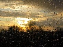 Nette Regentropfen nach Regen Lizenzfreie Stockfotos