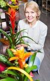 Nette reife blonde Frau, die Blumen vorwählt stockfoto