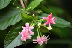 Nette rosa Blume lizenzfreies stockfoto