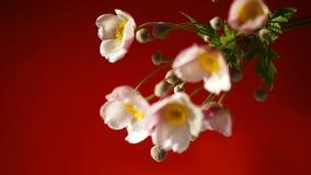 Nette rosa Blumen