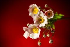 Nette rosa Blumen auf einem roten Hintergrund Lizenzfreies Stockfoto