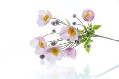Nette rosa Blumen auf einem weißen Hintergrund Lizenzfreie Stockbilder
