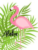 Nette rosa Flamingo-Sommer-Hintergrund-Vektor-Illustration Stockfotos